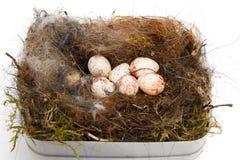 Nest van koolmees Stock Afbeeldingen