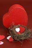 Nest van liefde Stock Fotografie