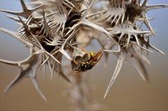 Nest van wespen onder doornen Royalty-vrije Stock Fotografie