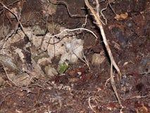 Nest von Wespen Stockbilder