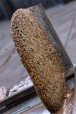 Nest von wilden Bienen auf Haus Stockbilder
