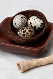 Nest in Wooden Plate Stock Photography