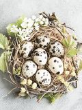 Nest or wreath made of quail eggs, fresh floweres, tree branches Royalty Free Stock Images