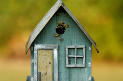 Nest of yellow jacket bees. A view of a small wooden toy house that has been taken over and infested by a swarm of yellow jacket bees for their nest.  A few bees Royalty Free Stock Images