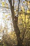 Nestbox w lesie podczas złotej godziny, rozjarzona natura, spokój, kawałek, cozyness obrazy stock