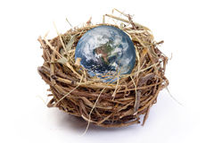 Nested Earth. Earth globe in bird's nest over white background Royalty Free Stock Images