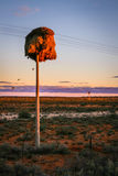 Nested phone pole in South Africa desert. A lonely nested phone pole. In south Africa desert where there are no trees  birds use what they have to build their Royalty Free Stock Photo