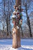 Nestelen-dozen op de boom Stock Foto's