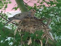 Nestelende vogel in boom Stock Afbeelding