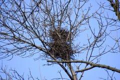 Nester von Krähen auf hohen Niederlassungen von Bäumen Später Fall Nester von Vögeln lizenzfreie stockfotos