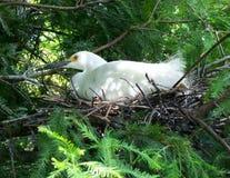 nesting στοκ φωτογραφίες με δικαίωμα ελεύθερης χρήσης