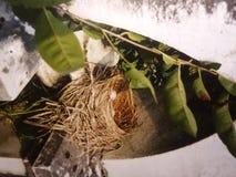 nesting στοκ φωτογραφίες