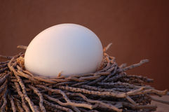 Nesting. Ostrich egg nestled in a bed of twigs royalty free stock photography
