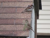 nesting στοκ εικόνες με δικαίωμα ελεύθερης χρήσης