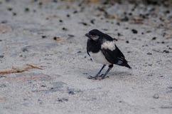 nesting στοκ φωτογραφία