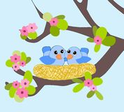 Nesting Birds. Two little blue birds in a nest Royalty Free Stock Photo