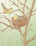 Nesting birds Stock Image