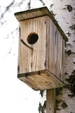 Nesting-box. Nesting box in a tree Royalty Free Stock Images