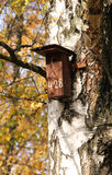 Nesting box on the birch Royalty Free Stock Image