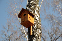 Nesting box on the birch Royalty Free Stock Images