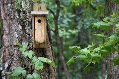 Nesting box for birds Royalty Free Stock Images