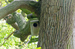 Nesting box Royalty Free Stock Photography