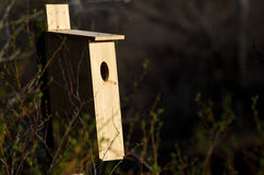 Nesting Box in the Early Morning Sunlight Royalty Free Stock Images