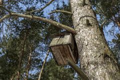 Nesting box in a fir tree. A wooden nesting box attached to a branch and trunk of a well established fir tree, pale blue sky seen through the branches Royalty Free Stock Images