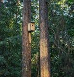 Nesting box on a pine tree stock photos