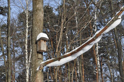 The nesting box  on a tree Royalty Free Stock Photo