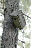 Nesting-box. On the tree in forest Stock Photo