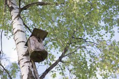 Nesting-box. On the tree in forest Stock Photography
