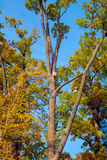 Nesting box on a tree. In sunny autumn day Royalty Free Stock Photo
