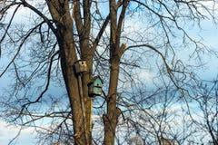 Nesting box on tree Stock Photography
