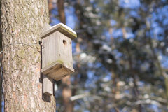 Nesting box on trunk of the tree in winter park Stock Image