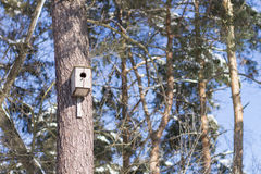 Nesting box on trunk of the tree in winter park Stock Photos