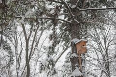 Nesting box under snow Stock Photography
