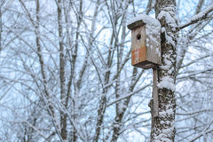 Nesting-box in winter Stock Image