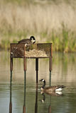 Nesting Boxes Stock Photography