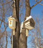Nesting boxes on a tree Stock Photo