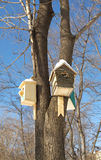 Nesting boxes on a tree Royalty Free Stock Images