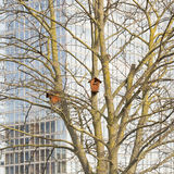 Nesting boxes on a tree Stock Images