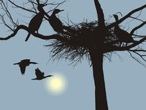 Nesting cormorants Stock Photography