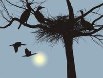 Nesting cormorants. Illustration cormorants nest in the dry tree Stock Photography
