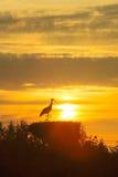 A nesting crane. Before a setting sun Stock Photo