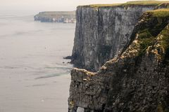 Clifftop seabird colony Stock Images