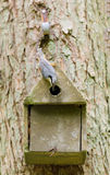 Nesting nuthatch Royalty Free Stock Photo
