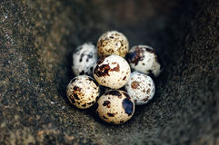 Nesting Stock Images