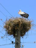 Nesting stork Royalty Free Stock Photo