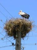 Nesting stork Royalty Free Stock Photo